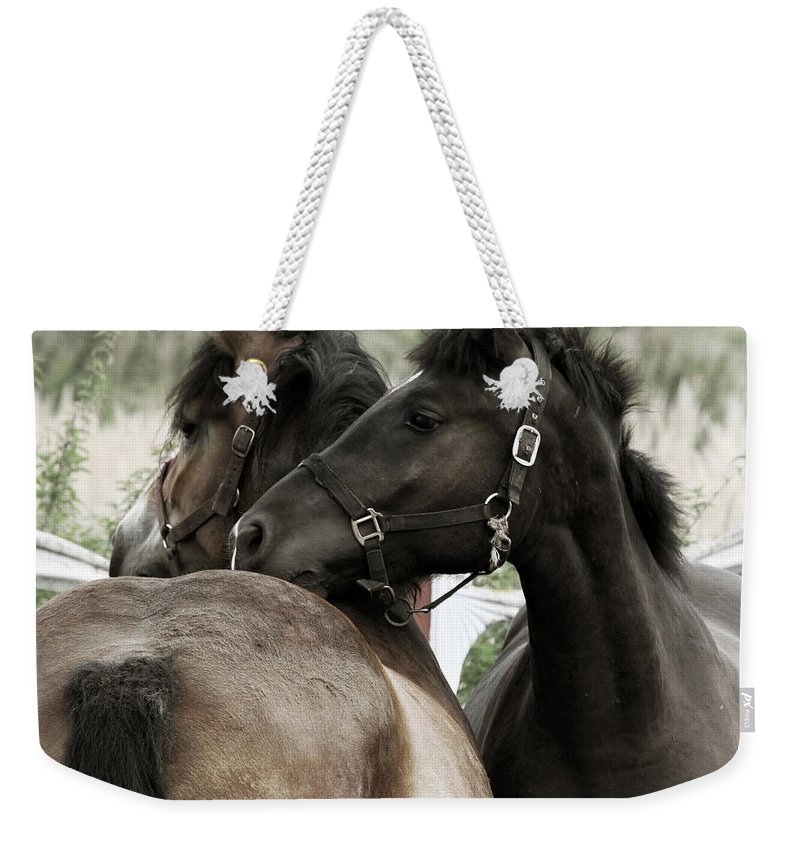 Valentines Weekender Tote Bag featuring the photograph Staying Together by Angel Tarantella