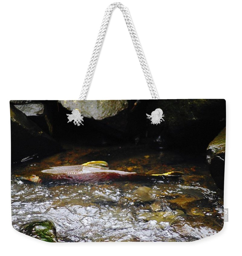 Wildlife Weekender Tote Bag featuring the photograph Steelhead Resting In The Shallows by Jeff Swan