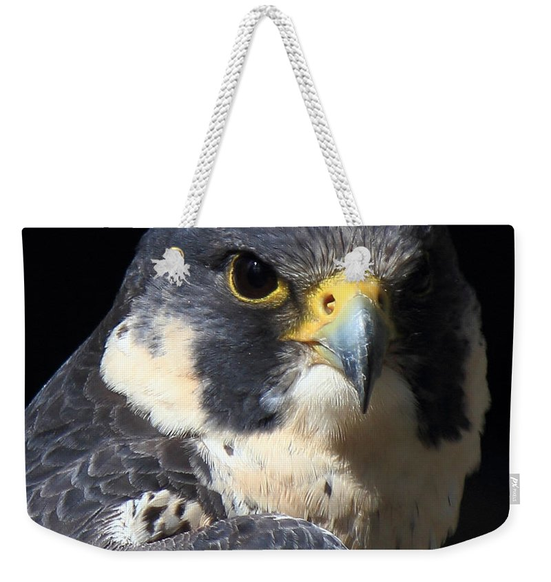 Peregrine Weekender Tote Bag featuring the photograph Steely Stare by Randy Hall