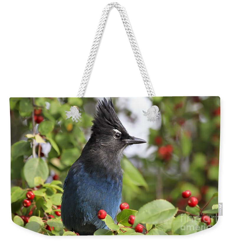 Bird Weekender Tote Bag featuring the photograph Steller's Jay And Red Berries by Teresa Zieba