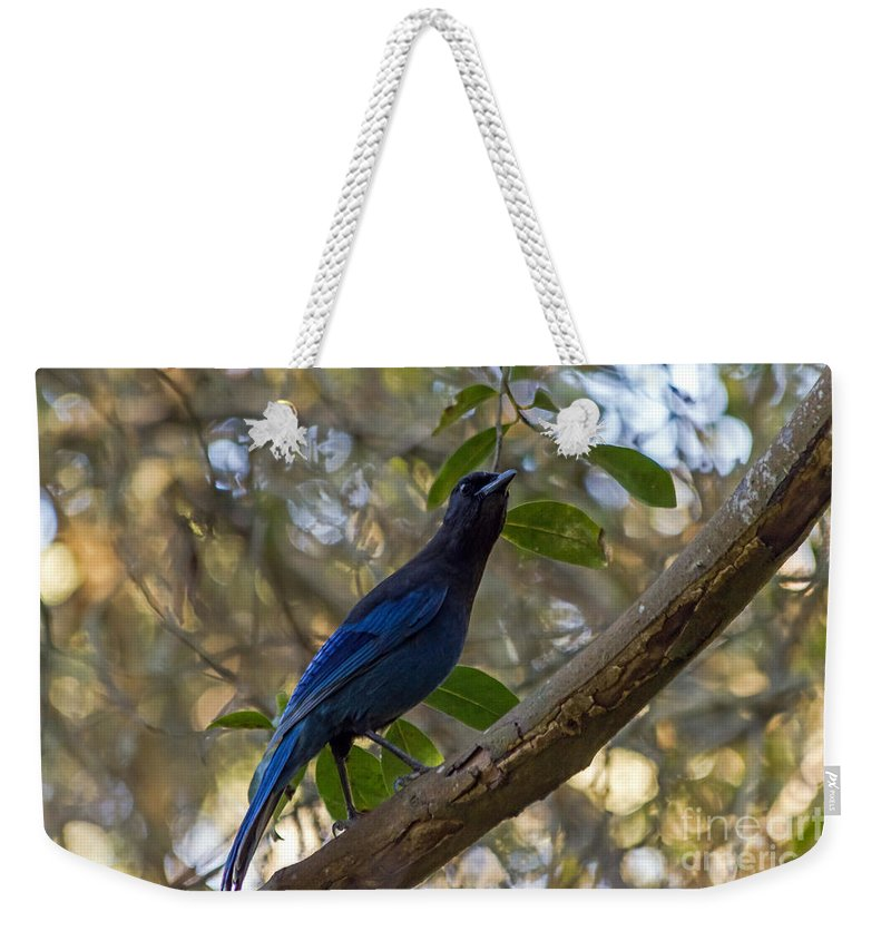 Bird Weekender Tote Bag featuring the photograph Steller's Jay by Kate Brown