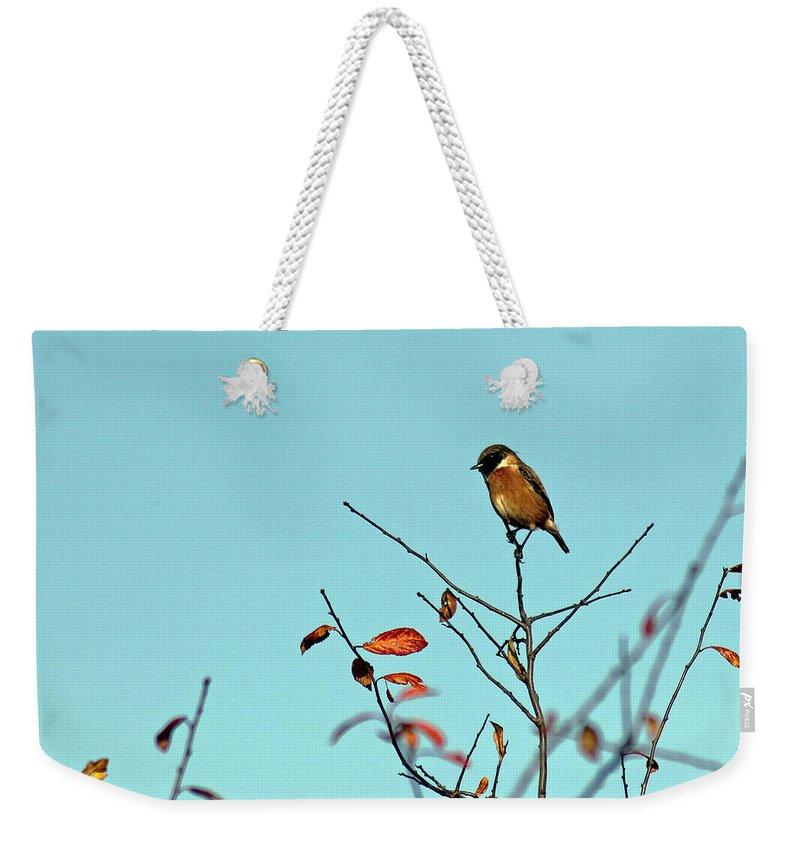 Stonechat Weekender Tote Bag featuring the photograph Stonechat by Tony Murtagh
