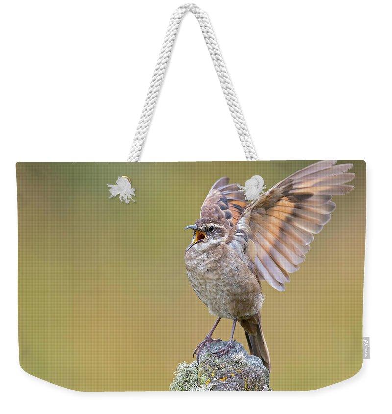 Birds Weekender Tote Bag featuring the photograph Stout-billed Cinclodes by Juan Jose Arango
