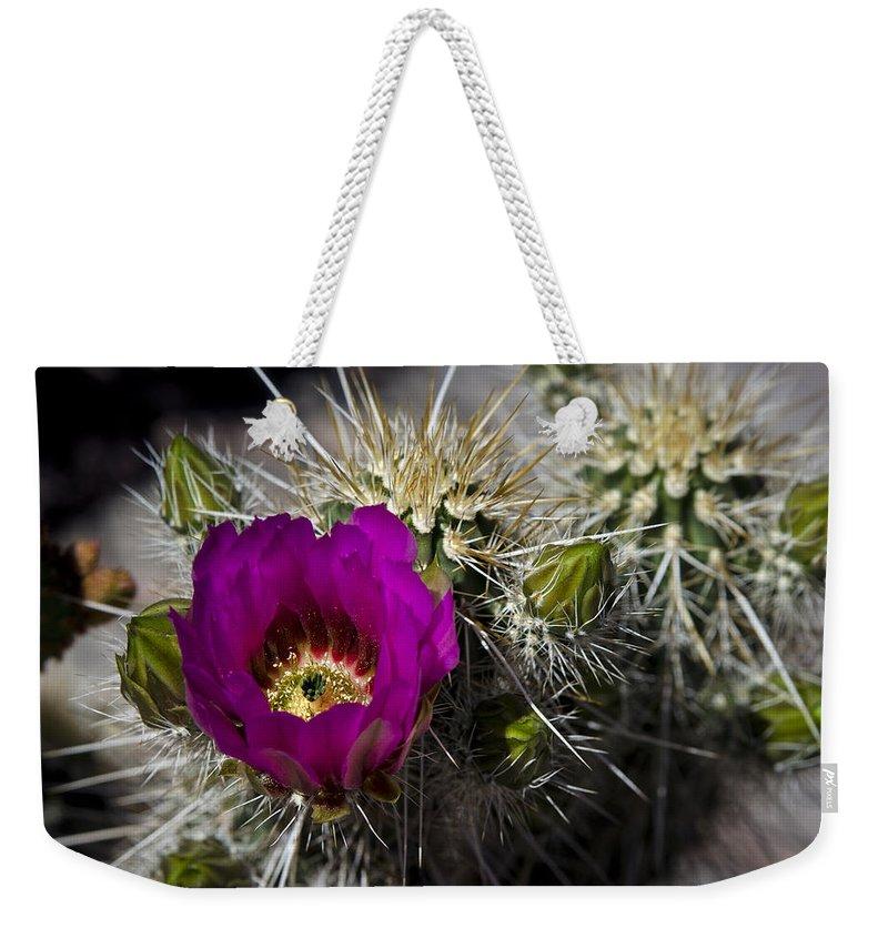 Strawberry Hedgehog Cactus Weekender Tote Bag featuring the photograph Strawberry Hedgehog by Saija Lehtonen
