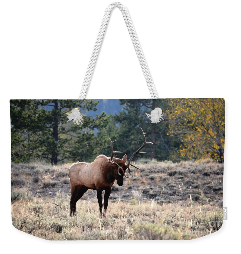 Bull Elk Weekender Tote Bag featuring the photograph Stretch by Deanna Cagle