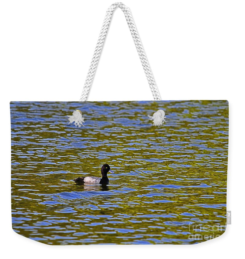 Duck Weekender Tote Bag featuring the photograph Striking Scaup by Al Powell Photography USA