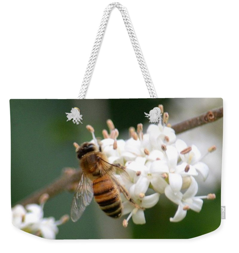 Study Of A Bee Weekender Tote Bag featuring the photograph Study Of A Bee by Maria Urso