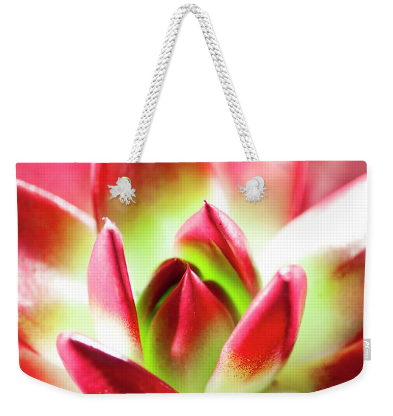 Cut Out Weekender Tote Bag featuring the photograph Succulent Echeveria by Lrescigno