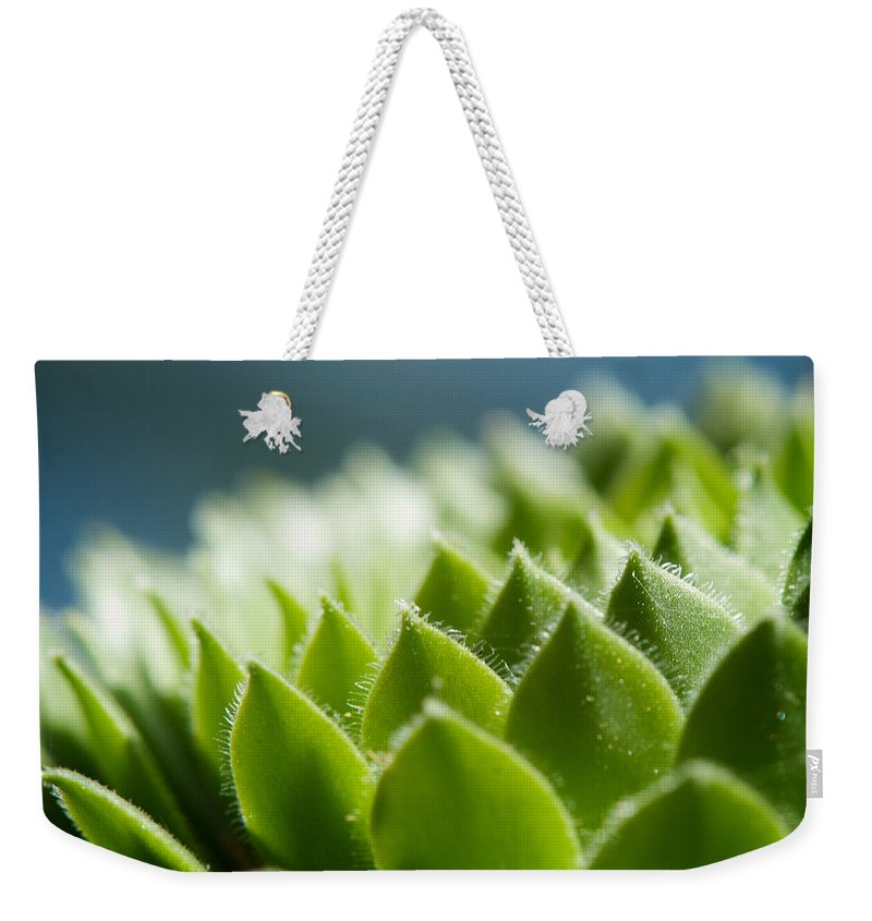 Hen And Chicks Weekender Tote Bag featuring the photograph Succulent by Lisa Knechtel