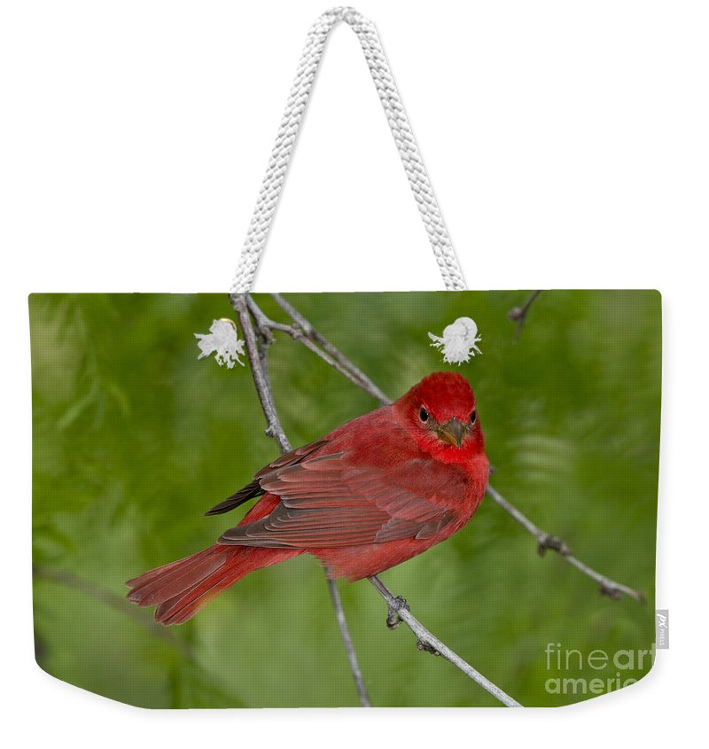 Summer Tanager Weekender Tote Bag featuring the photograph Summer Tanager Male by Anthony Mercieca