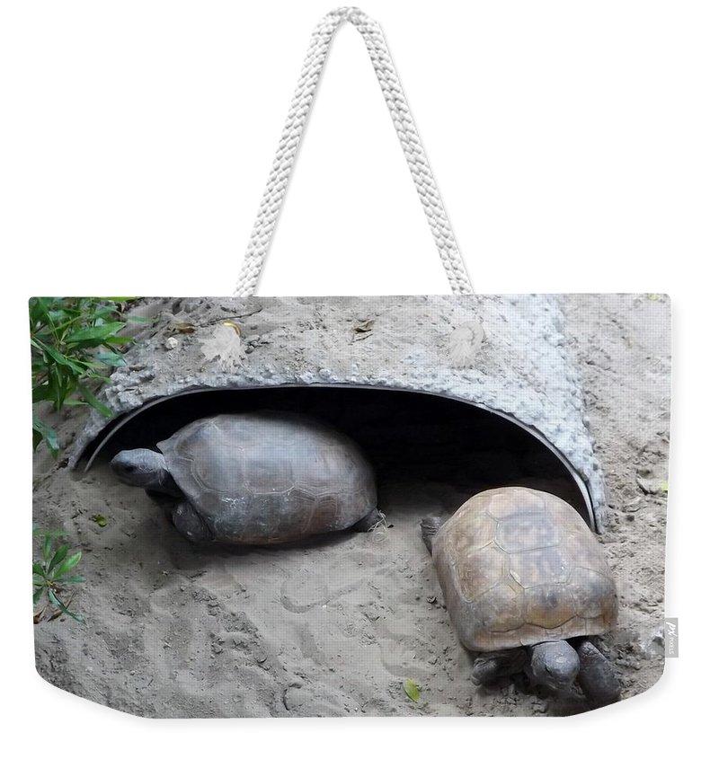 Turtle Weekender Tote Bag featuring the photograph Sun Basking Turtles by Linda Kerkau