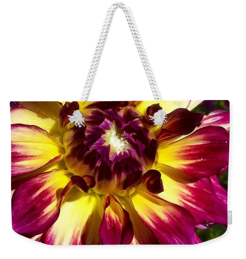 Dahlia Festival Weekender Tote Bag featuring the photograph Sun Burst Purple Dahlia by Susan Garren