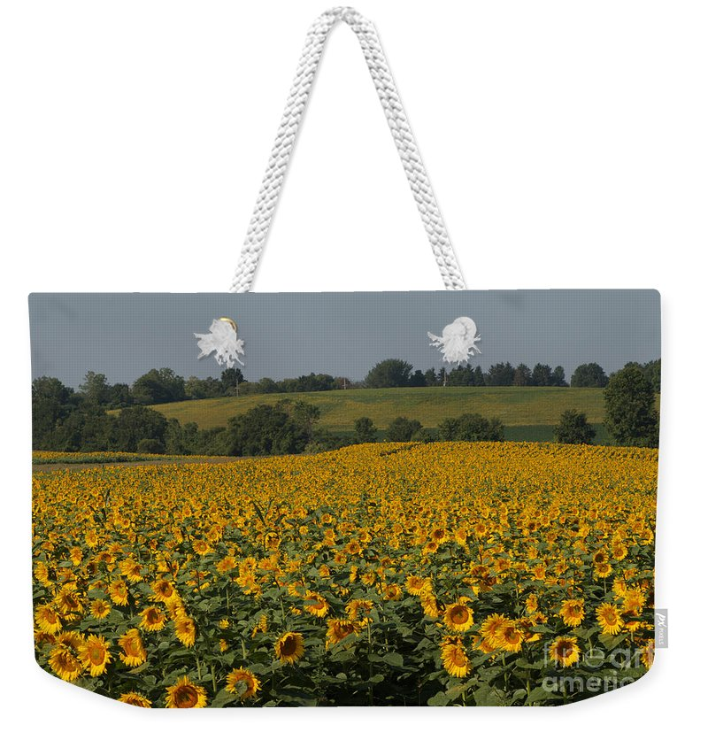 Sun Flower Weekender Tote Bag featuring the photograph Sun Flower Sea by William Norton