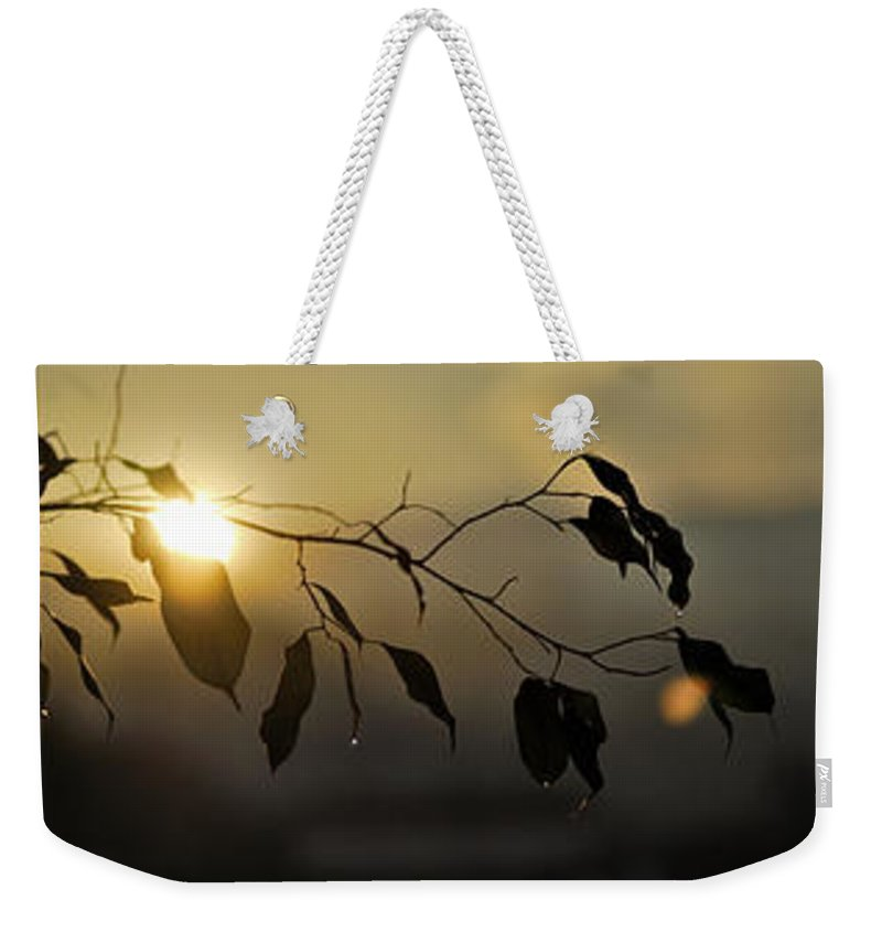 Triptic Weekender Tote Bag featuring the photograph Sun Leaves by Guido Montanes Castillo