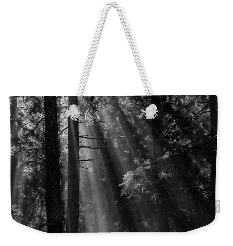 California Weekender Tote Bag featuring the photograph Sun Through The Trees by Robert Woodward
