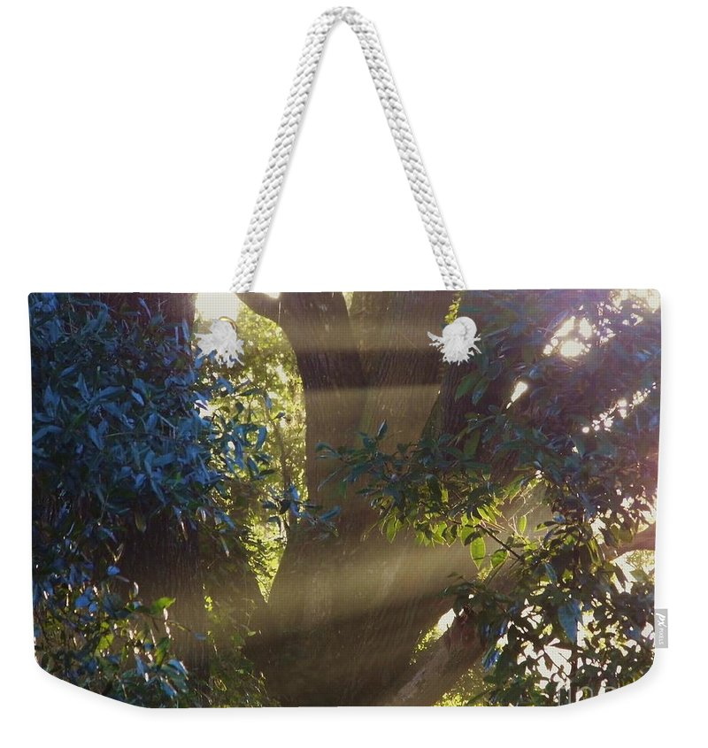 Sunshine Weekender Tote Bag featuring the photograph Sunbeams In The Tree by D Hackett