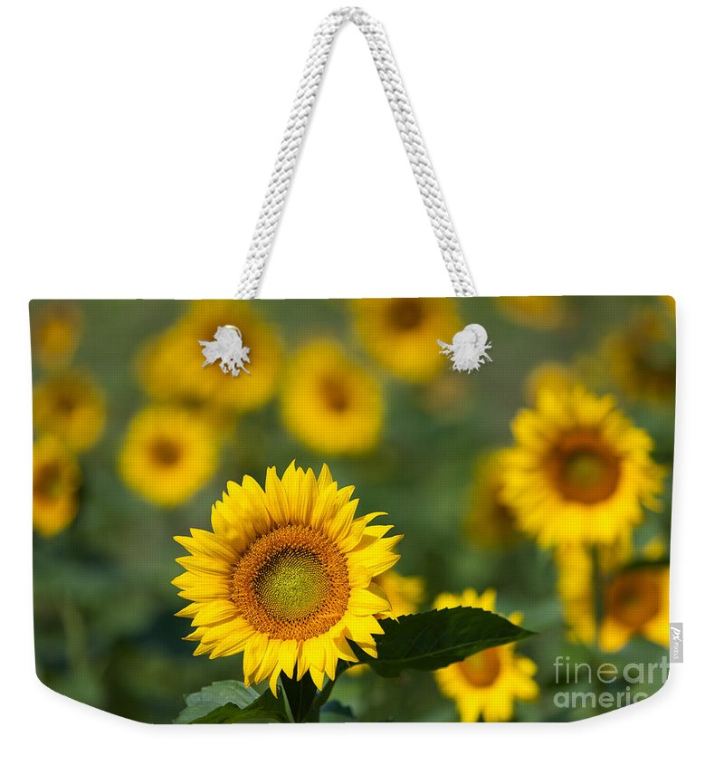 Clarence Holmes Weekender Tote Bag featuring the photograph Sunflower Field In Bloom I by Clarence Holmes