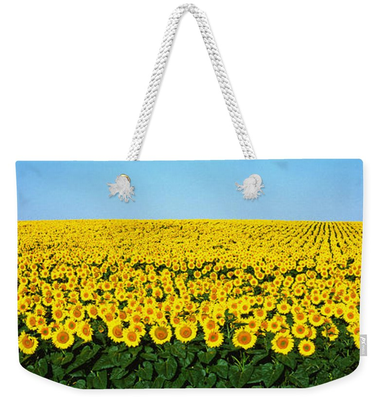 Photography Weekender Tote Bag featuring the photograph Sunflower Field, North Dakota, Usa by Panoramic Images