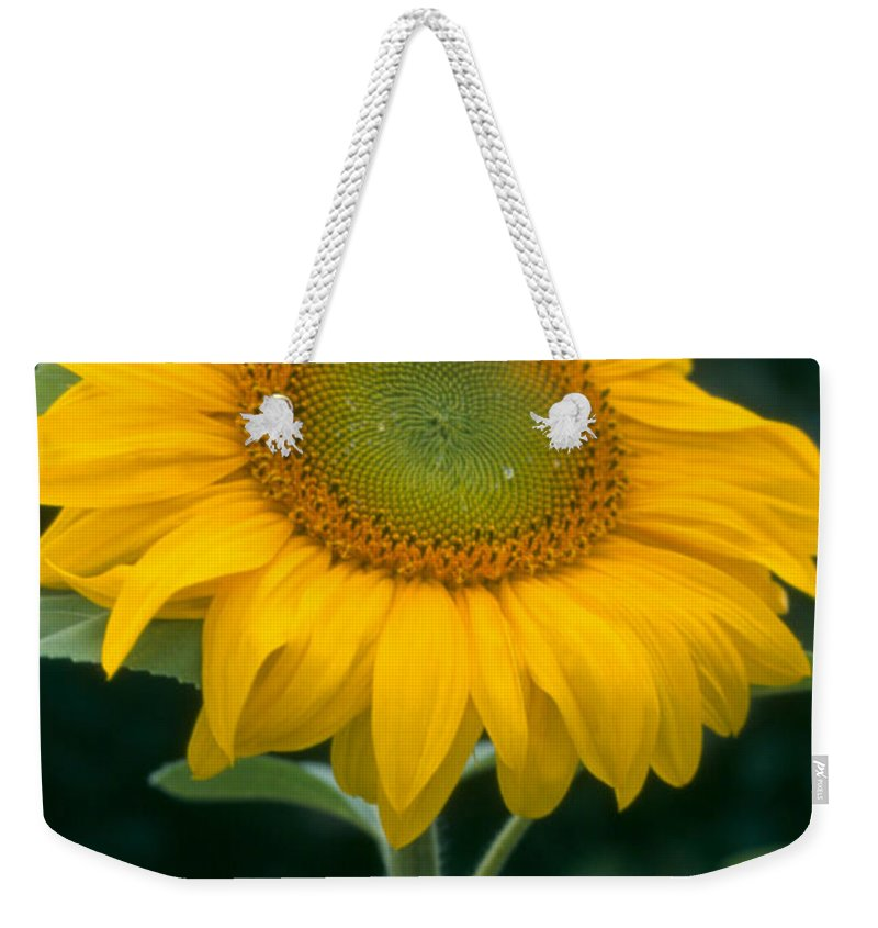 Flower Weekender Tote Bag featuring the photograph Sunflower In Seattle by Heather Kirk