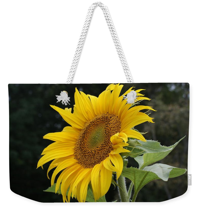 Sunflower Weekender Tote Bag featuring the photograph Sunflower Looking To The Sky by Holly Eads
