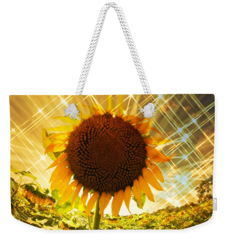 Sunflower Weekender Tote Bag featuring the photograph Sunflower Starbursts by Alice Gipson