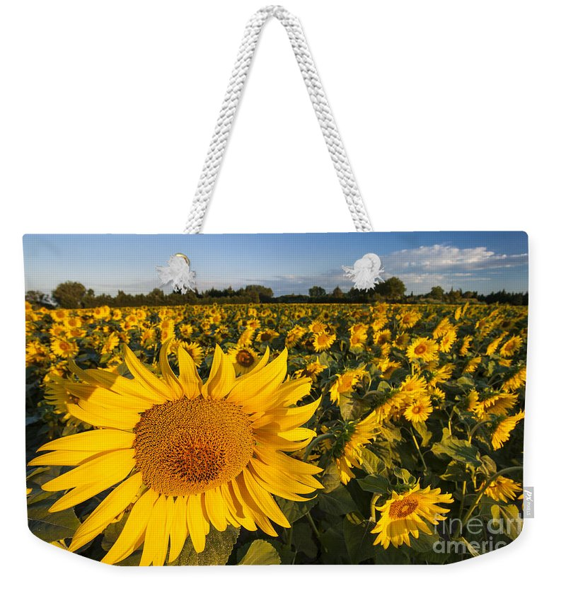 Bright Weekender Tote Bag featuring the photograph Sunflowers At Dawn by Brian Jannsen