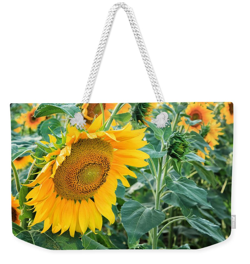 Square Weekender Tote Bag featuring the photograph Sunflowers For Wishes by Bill Wakeley