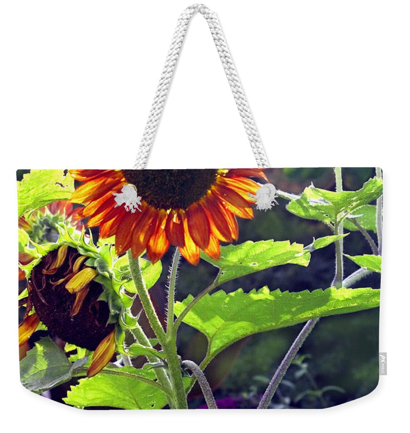 Nature Weekender Tote Bag featuring the photograph Sunflowers In The Park by Madeline Ellis