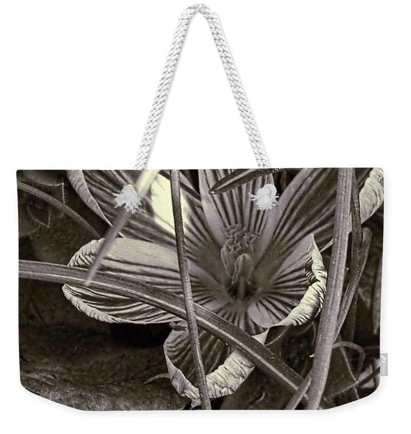 Crocus Weekender Tote Bag featuring the photograph Sunlit Crocus by Bonnie Willis