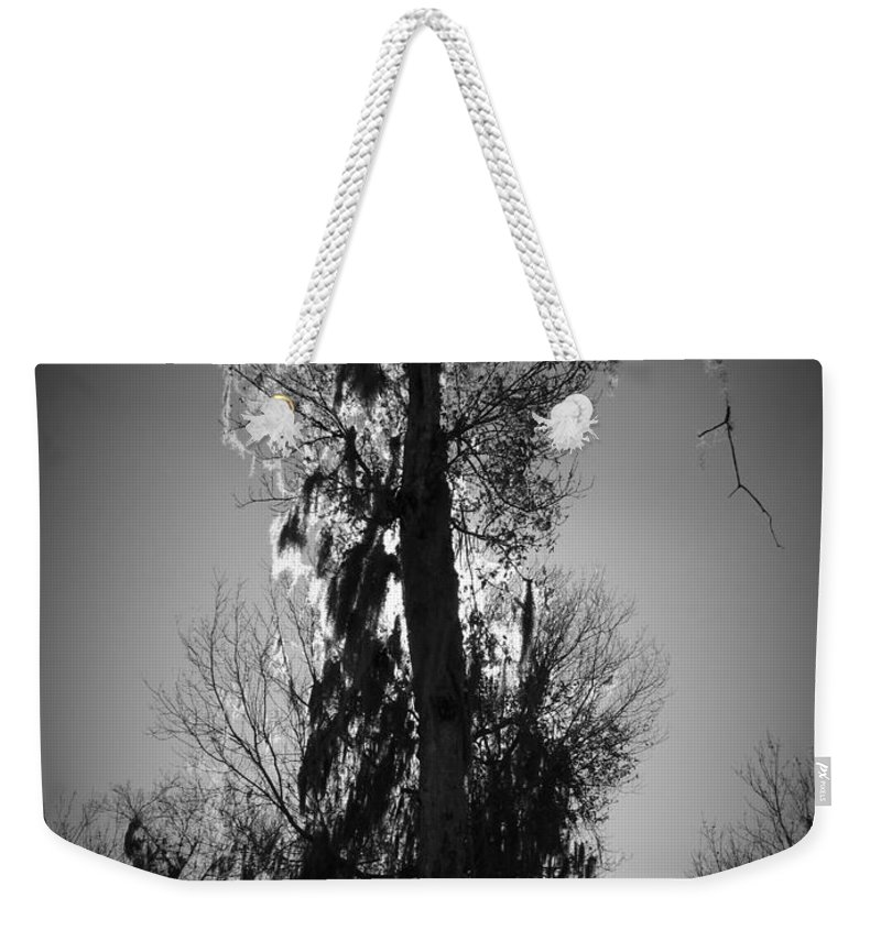 Black Weekender Tote Bag featuring the photograph Sunlit Moss by Phil Penne