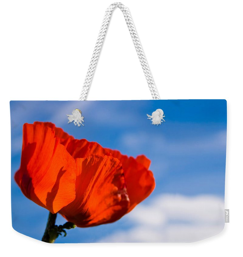 3scape Photos Weekender Tote Bag featuring the photograph Sunlit Poppy by Adam Romanowicz