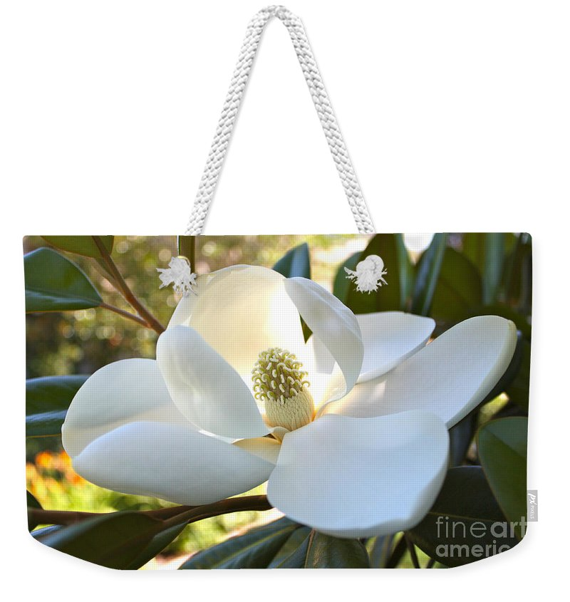 Floral Weekender Tote Bag featuring the photograph Sunlit Southern Magnolia by Carol Groenen
