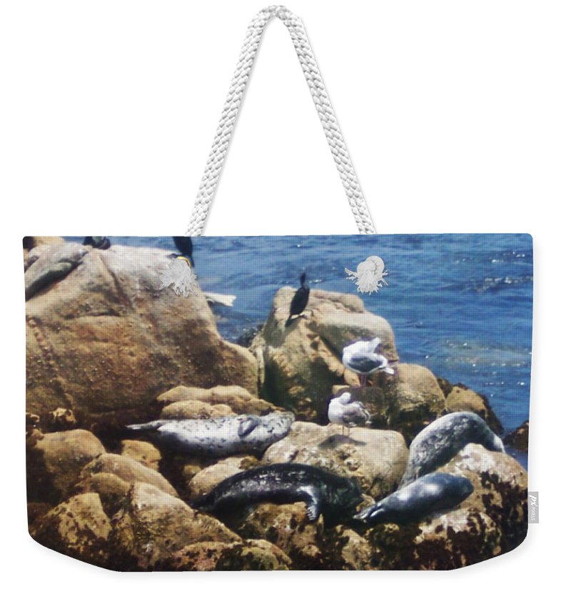 Sunning Seals Weekender Tote Bag featuring the photograph Sunning Seals by Pharris Art