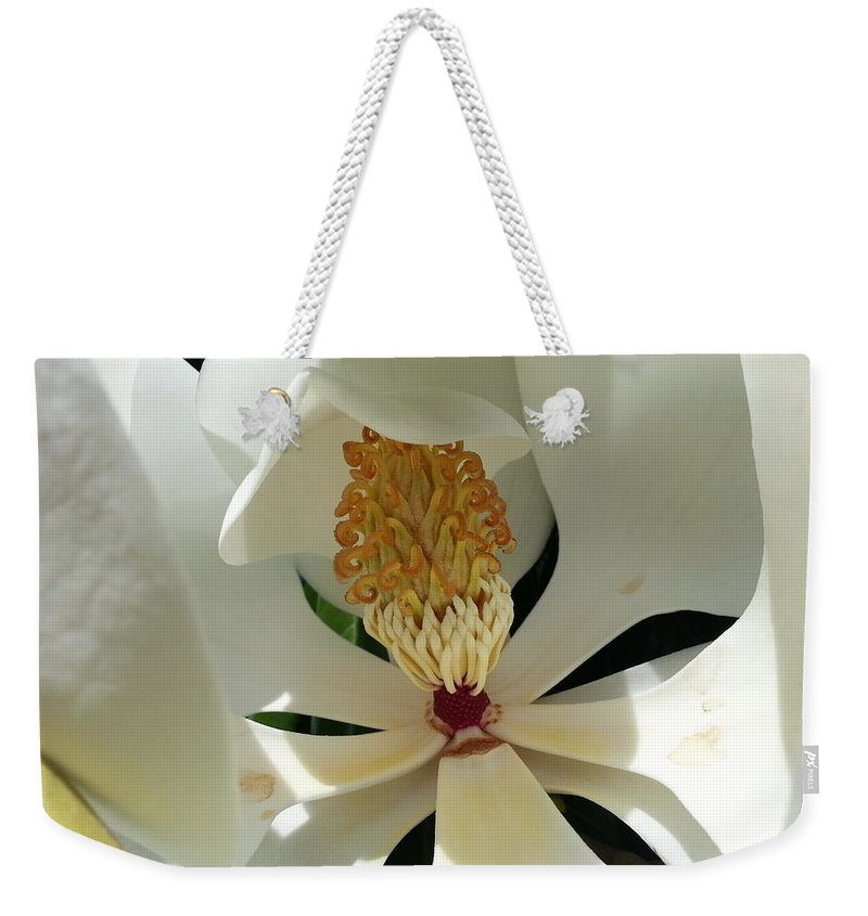 Magnolia Weekender Tote Bag featuring the photograph Sunny And Shy Magnolia by Caryl J Bohn