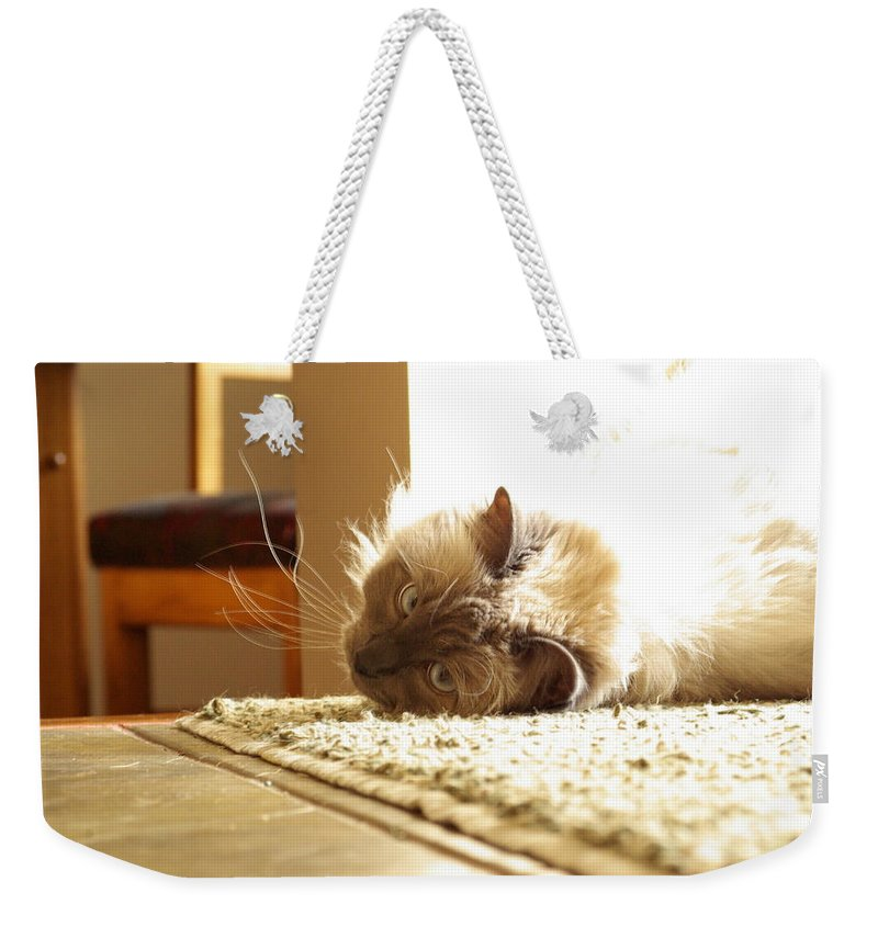 Cat Weekender Tote Bag featuring the photograph Sunny Jack by Cindy Johnston