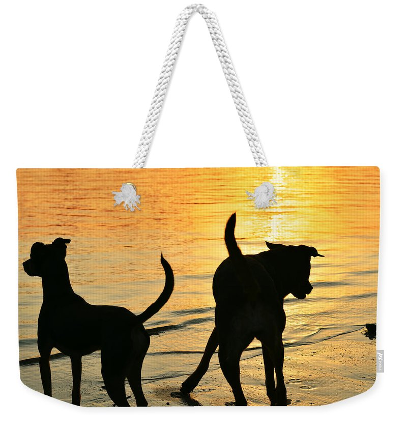Beach Weekender Tote Bag featuring the photograph Sunset Dogs by Laura Fasulo