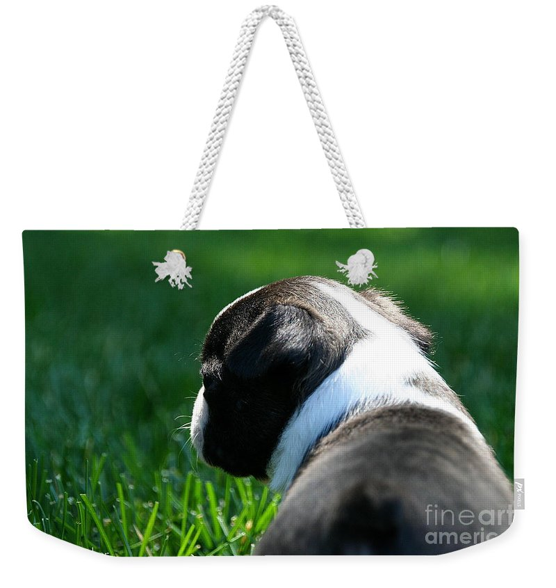 Dog Weekender Tote Bag featuring the photograph Sunshine On My Shoulders by Susan Herber