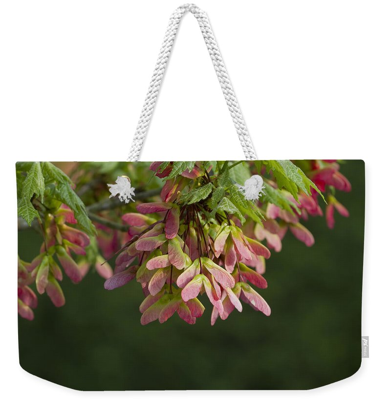 Acer Circinatum Weekender Tote Bag featuring the photograph Super Sweet Winged Maple Seeds by Kathy Clark