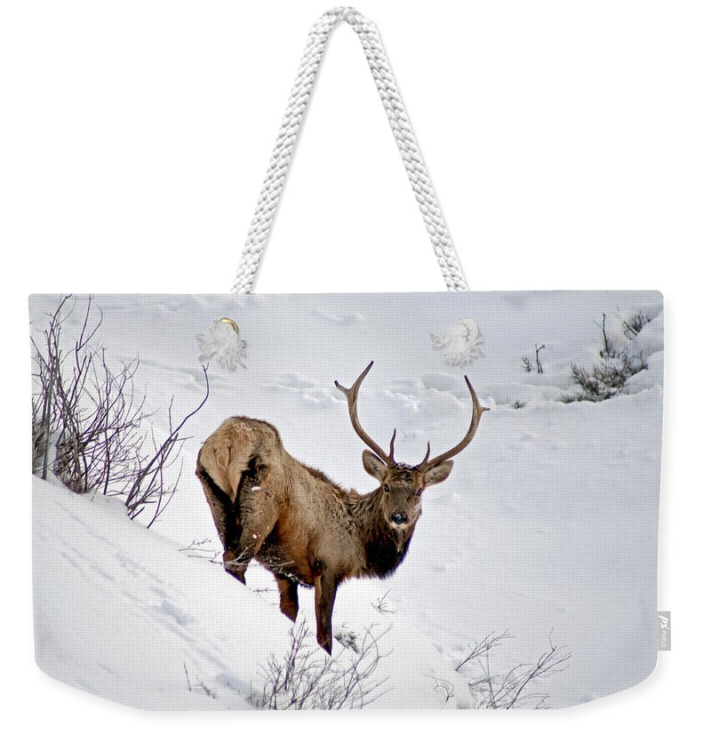 Colorado Weekender Tote Bag featuring the photograph Surviving by Jeremy Rhoades