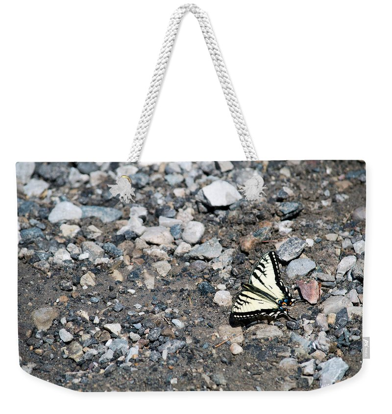 Swallowtail Weekender Tote Bag featuring the photograph Swallowtail by Linda Kerkau
