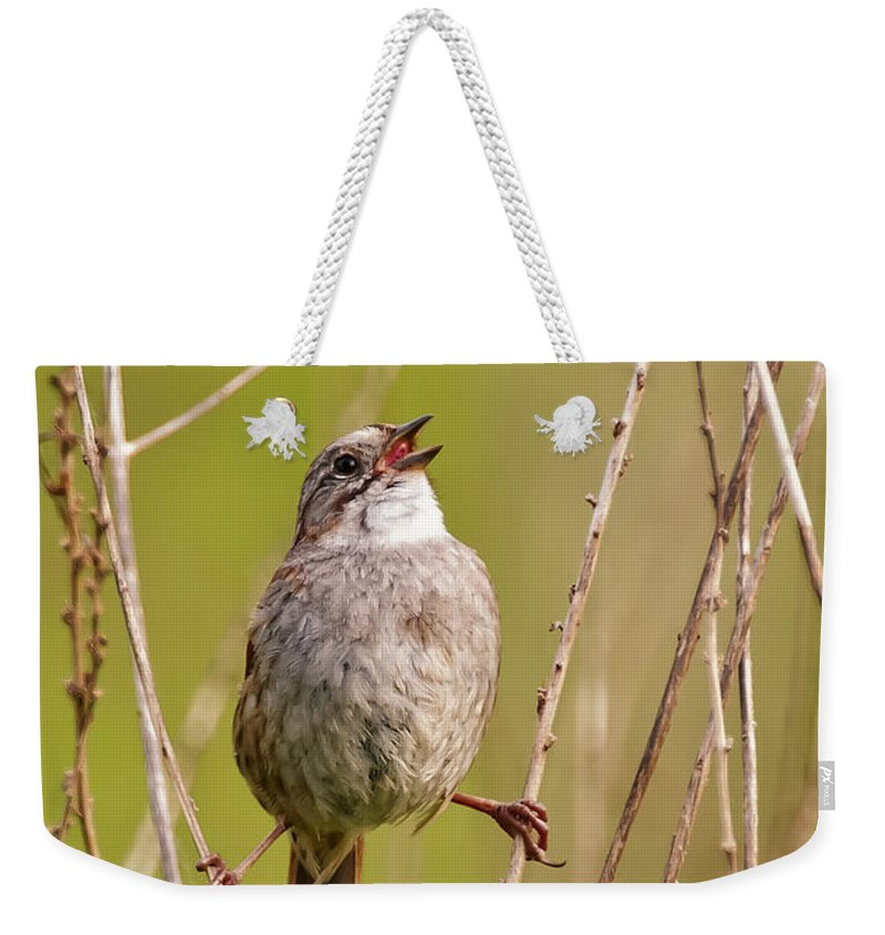 Swamp Sparrow Weekender Tote Bag featuring the photograph Swamp Sparrow Split Decision by Timothy Flanigan