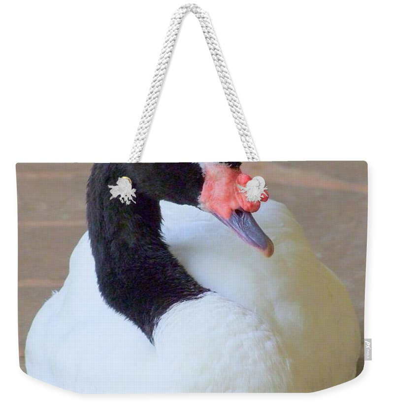 Swan Weekender Tote Bag featuring the photograph Swan At Rest by Mary Deal