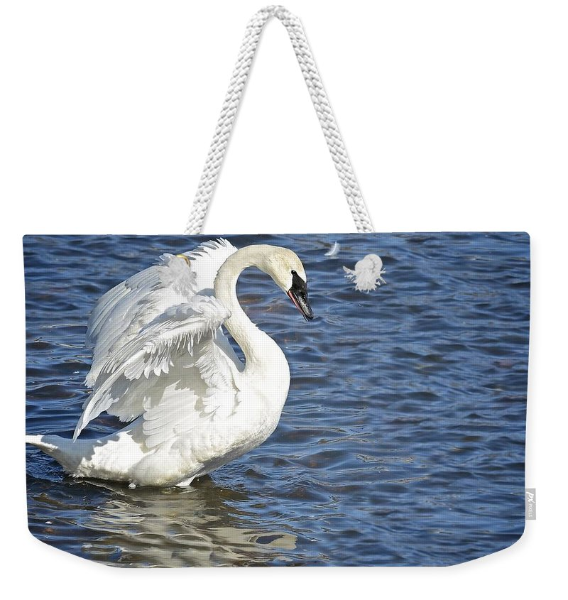 Swan Weekender Tote Bag featuring the photograph Swan Feather by Craig Voth