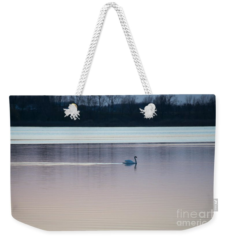 Swan Weekender Tote Bag featuring the photograph Swan On Lake At Dusk by David Arment