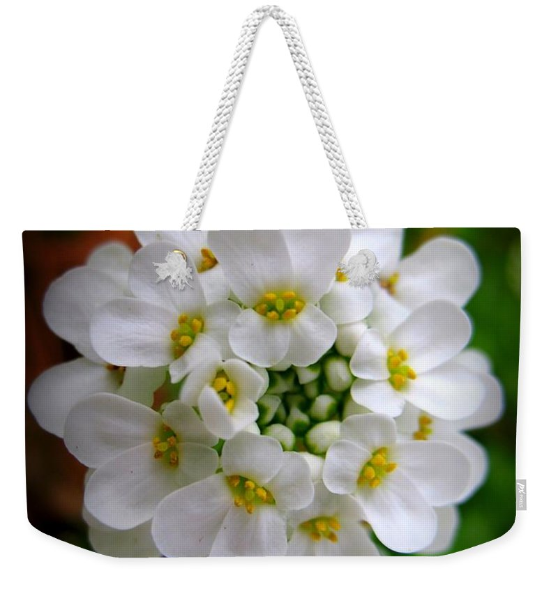 Sweet Alyssum Weekender Tote Bag featuring the photograph Sweet Alyssum by Patti Whitten