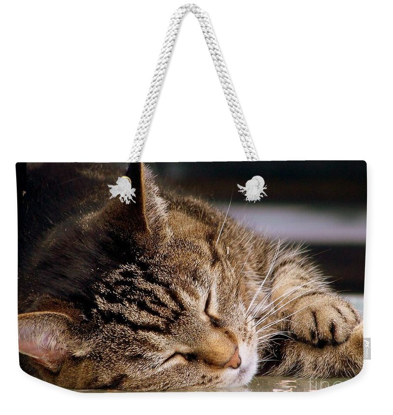 Dream Weekender Tote Bag featuring the photograph Sweet Dreams by Eunice Miller
