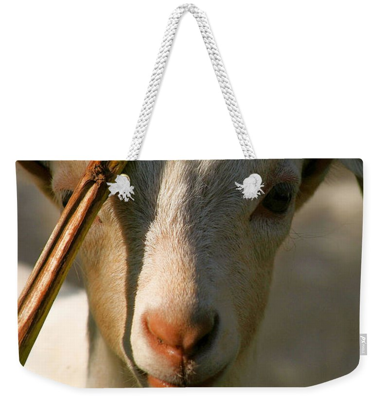 Goat Weekender Tote Bag featuring the photograph Sweet Kid by Tracey Beer
