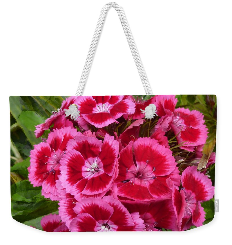 Pink Weekender Tote Bag featuring the photograph Sweet William Has A Pink Eye by Steve Taylor
