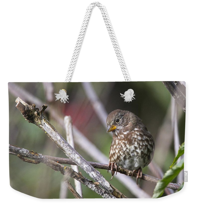 Doug Lloyd Weekender Tote Bag featuring the photograph Sweetie by Doug Lloyd