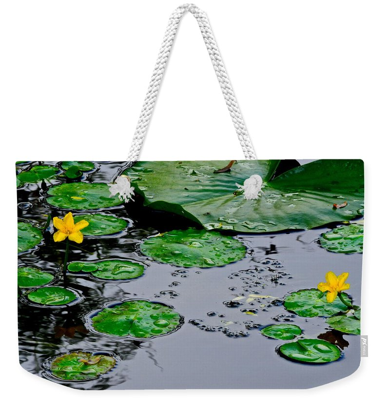 Lilly Weekender Tote Bag featuring the photograph Tadpole Haven by Frozen in Time Fine Art Photography